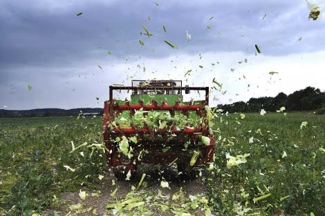 netanews :     España pedirá cuentas a la Unión Europea por la crisis de los pepinos//el pepinazo